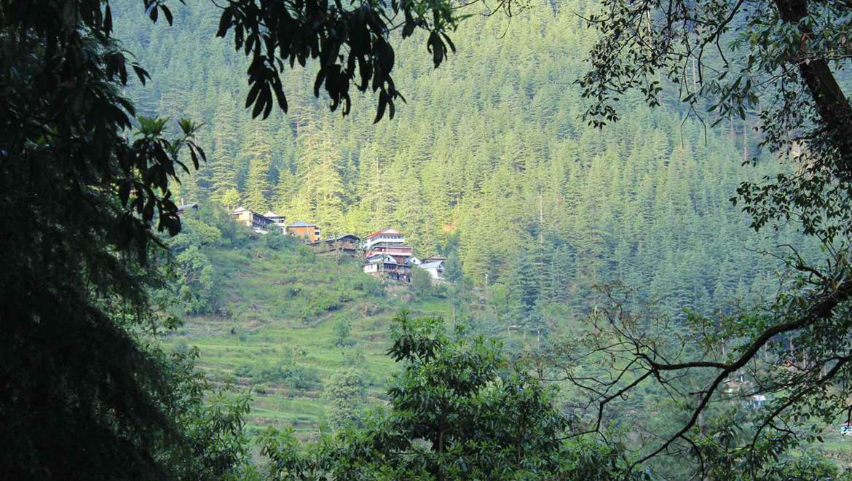 Yoga and Trekking in the Himalayan Village – Jibhi Himachal Pradesh