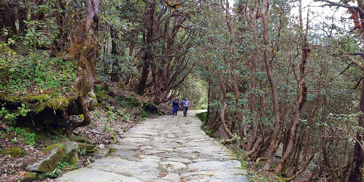 Yoga-Retreat-Himalyas-Uttrakhand-Chopta-Chandrashila-Hiking-4-1.jpg