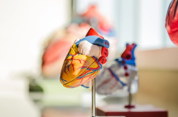 Heart Arrhythmia – What You Need To Know