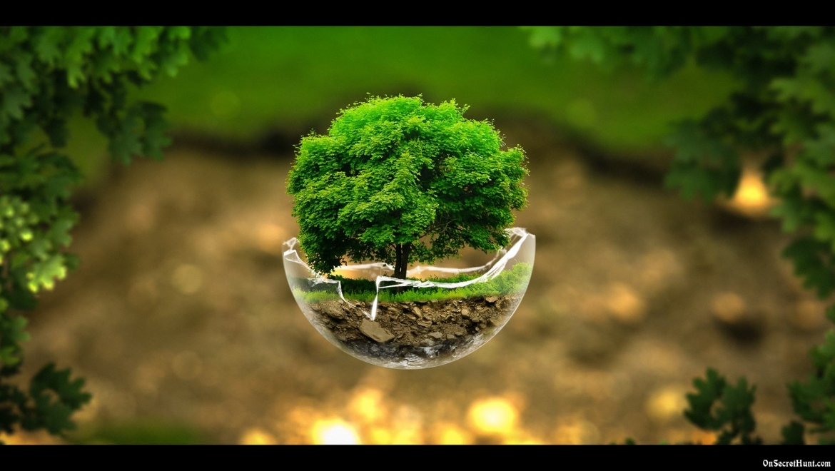 Yoga Asanas Inspired by the Earth: Earth Day Special